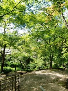 四季折々に訪れたいお寺 正暦寺へ_4