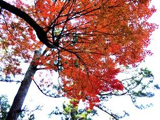 秋は赤橙黄緑青の彩_8