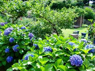 美しいお庭も魅力たっぷりの東洋民俗博物館_3