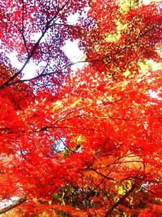 時空を超えた「奈良」を描いて_1