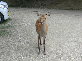 鹿と共生するために_1