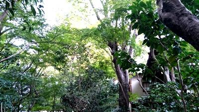 「奈良を撮り続けた男、入江泰吉」とっておき情報_1