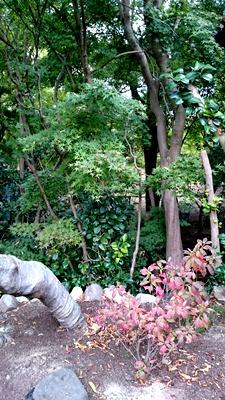 「奈良を撮り続けた男、入江泰吉」とっておき情報_2