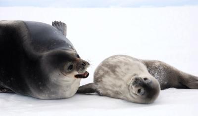 南極・防災・農業がつなぐもの その1_1