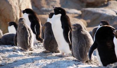 南極・防災・農業がつなぐもの その1_2
