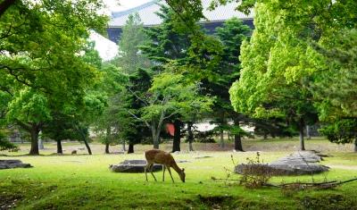 なぜ「小さなホテル奈良倶楽部」には奈良好きのリピーターが多数訪れるのか_5
