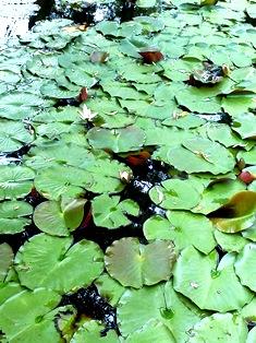 奈良には365の季節がある その2_1