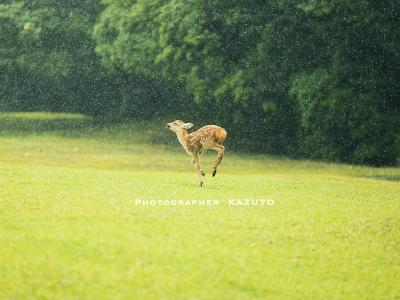 Dear deer 鹿たちの楽園_1