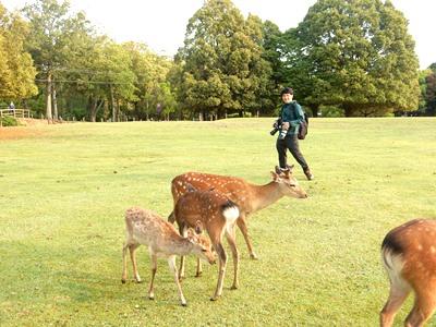 Dear deer 鹿たちの楽園_4