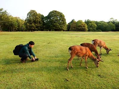 Dear deer 鹿たちの楽園_6