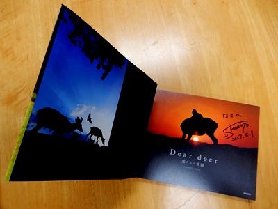 Dear deer 鹿たちの楽園_9
