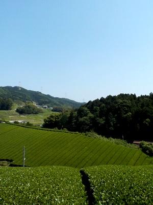 8月授業でぜひ田原へ!Part 2_1