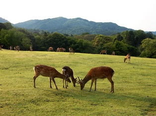 耳で感じる奈良の景色_4
