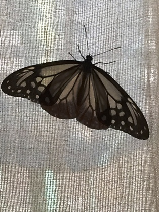 蝶は羽ばたき森を舞う_5