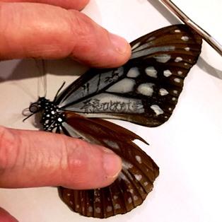 蝶は羽ばたき森を舞う_8
