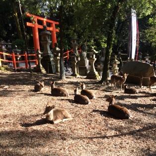 奈良、といえば鹿_2