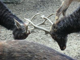 奈良、といえば鹿_4