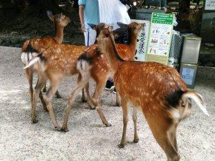 奈良、といえば鹿__5