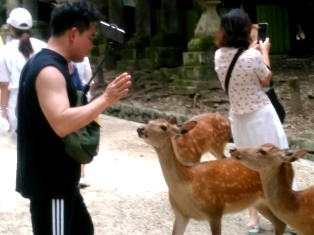 奈良、といえば鹿__6
