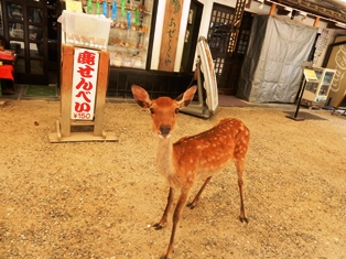 奈良、といえば鹿_7