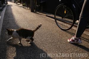 映える写真の撮り方と、ときどき猫_1