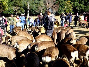 鹿寄せは鹿だけじゃなく人も集まる_2