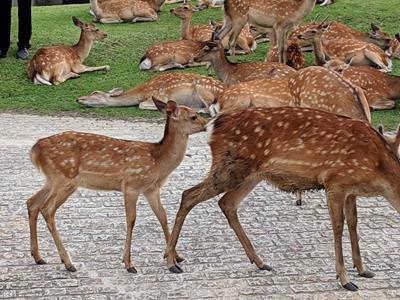 奈良の鹿は今日も元気です