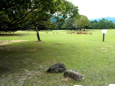 奈良公園で宝探しをします