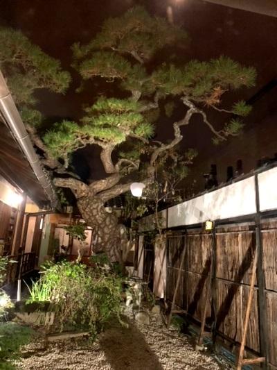 心惹かれるお店と店主と松の木と_5