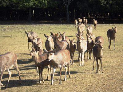 集まれ!鹿LOVERS!!