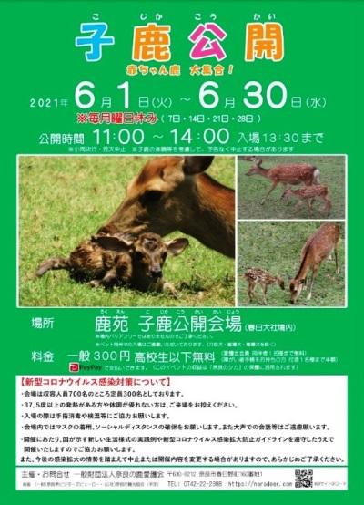 すべては奈良公園の鹿たちのために