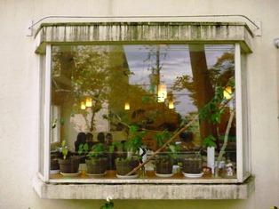 緑いっぱいのカフェへのご案内♪_9