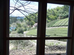 小旅行気分 茶畑の中のステキな空間_6