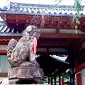 ひとまちの街 氷室神社