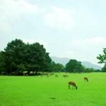 ひとまちの街 奈良公園