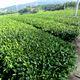 東アジア文化都市2016奈良市×奈良ひとまち大学 meets 大和茶
