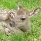 ボクの仕事は「奈良の鹿」