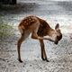 奈良公園の鹿のリアルを知ろう