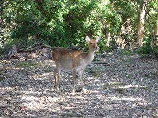 ひとまちレポート ボクの仕事は「奈良の鹿」の授業を終えて_4