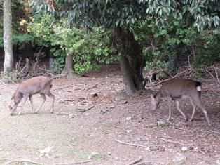 歴史から考える奈良の鹿_2