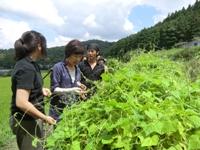 ひとまちレポート 大和野菜を通したまちづくり_8