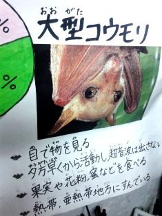 ぎょえぇ~!!コウモリだっ!(笑)_3