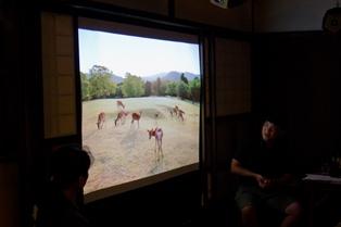 奈良公園の自然と鹿の可愛さを満喫_3