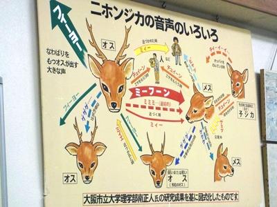 新米奈良県民、シカを学ぶ。_4