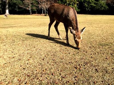「鹿」を知りたくて_2