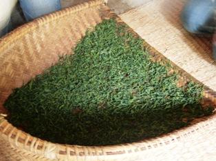 ひとまちレポート お茶摘みは重労働でも充実感たっぷり_6