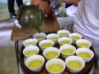 ひとまちレポート お茶摘みは重労働でも充実感たっぷり_7